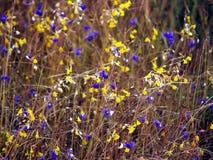 Wildflowers Pha Tam09 fotografia stock