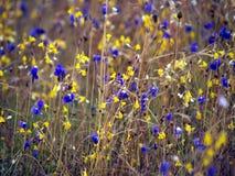 Wildflowers Pha Tam12 zdjęcie royalty free