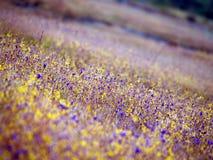 Wildflowers Pha Tam13 obraz royalty free