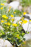 Wildflowers pirenáicos Imágenes de archivo libres de regalías