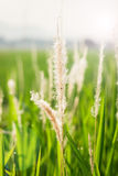 Wildflowers and plants in sunny field Stock Photography