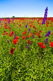 wildflowers polowe obrazy royalty free