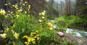 Wildflowers por el río foto de archivo