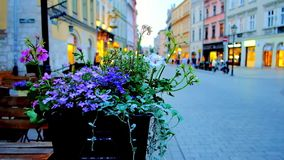 Wildflowers in pot, Krakow, Poland. The wildflowers in pot on the summer terrace of the restaurant in Grodzka street of Old Town Stare Miasto, Krakow, Poland stock footage