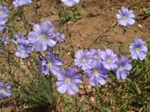 Wildflowers pourpres en nature Images libres de droits