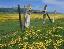 Wildflowers, prados, cerca vieja, montañas y cielo Imagenes de archivo