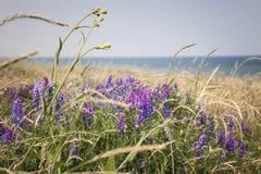Wildflowers on Prince Edward Island Stock Images