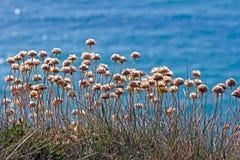 Wildflowers profilati sul mare Fotografie Stock