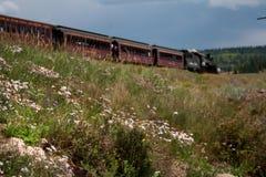 Wildflowers que crescem ao longo da estrada de ferro cênico de Cumbres Toltec Foto de Stock