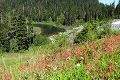 Wildflowers que florecen cerca del lago Mazama foto de archivo libre de regalías
