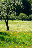 Wildflowers que florecen en campo Imagenes de archivo