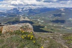 Wildflowers que florecen en un top de la montaña - jaspe NP, Canadá Imagen de archivo