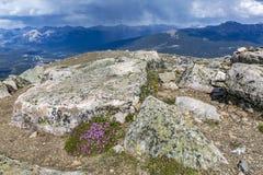 Wildflowers que florecen en un top de la montaña - jaspe NP, Canadá Fotografía de archivo