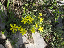 Wildflowers r na górze Sulaiman-Too w Osh mieście Zdjęcia Royalty Free