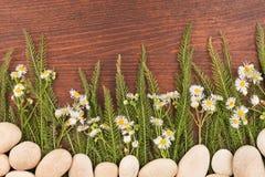 Wildflowers r od białych kamieni na ciemnym drewnianym tle Zdjęcie Royalty Free