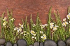 Wildflowers r od czarnych kamieni na ciemnym drewnianym tle Zdjęcie Royalty Free