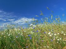 Wildflowers am Rand des Feldes Stockfotos