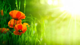 Free Wildflowers, Red Poppies In Nature Royalty Free Stock Images - 29373939