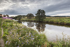 Wildflowers on River Deveron in Scotland. Wildflowers and Path on the River Deveron at Huntly in Aberdeenshire, Scotland royalty free stock photo