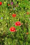 Wildflowers on riverbank, Tamworth. Stock Photography