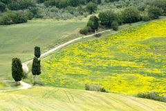 Wildflowers and road in Tuscany. Cypress trees alongside a winding road in Tuscany near Pienza stock image