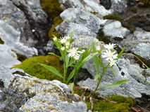 Wildflowers on a rock near Wawa Ontario Canada Royalty Free Stock Photo