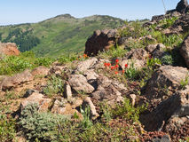 Wildflowers among rocks in mountains Royalty Free Stock Image