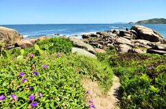Wildflowers on rocky coastline