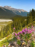 Wildflowers, Rocky Mountain, Canada Fotografia Stock