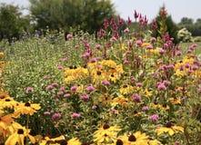 Wildflowers, rosa e giallo Immagini Stock
