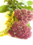 Wildflowers rosados y amarillos Imagen de archivo