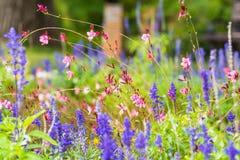 Wildflowers rosados y púrpuras en el campo con el fondo borroso Imágenes de archivo libres de regalías