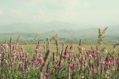 Wildflowers roses parmi l'herbe verte Horizontal de montagne Photographie stock