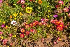 Wildflowers rossi, gialli e bianchi Immagine Stock Libera da Diritti