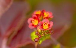 Wildflowers rot Stockbild