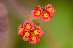 Wildflowers-Rot 2 Lizenzfreies Stockbild