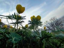 Wildflowers s'élevant sur le bâti Sulaiman-Too dans la ville d'Osh Photographie stock libre de droits