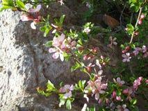 Wildflowers s'élevant sur le bâti Sulaiman-Too dans la ville d'Osh Image stock