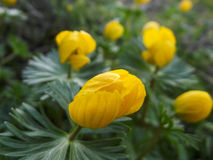 Wildflowers s'élevant sur le bâti Sulaiman-Too dans la ville d'Osh Images stock