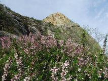 Wildflowers s'élevant sur le bâti Sulaiman-Too dans la ville d'Osh Image libre de droits