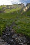 Wildflowers in San Juan Mountains in Colorado royalty free stock image