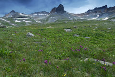 Wildflowers in San Juan Mountains in Colorado Stock Image