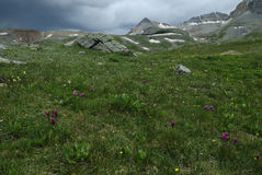 Wildflowers in San Juan Mountains in Colorado Stock Photo