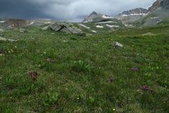 Wildflowers in San Juan Mountains in Colorado stock photo