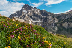 Wildflowers at Sawtooth Lake, Idaho. Summer wildflowers and mountain reflections at Sawtooth Lake, the popular hiking and backpacking destination near Stanley royalty free stock photos