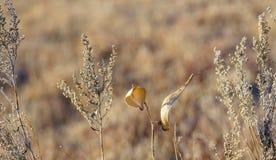 Wildflowers secs dans des tons de la terre Images libres de droits