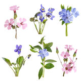 Wildflowers set isolated Royalty Free Stock Image