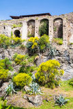 Wildflowers and Shrubs by Ancient Pompeii Wall Stock Image