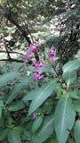 Wildflowers in siepi di arbusti Fotografia Stock