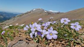 Wildflowers in the Sierra Nevada Stock Photo